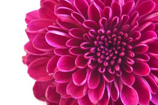 Flower%20for%20195%2C000%20networks.jpg