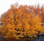 Northwoods Fall Colors, by Basser