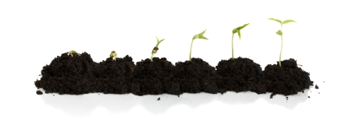 sequence from seedling to baby plant